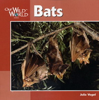 Bats Our Wild World